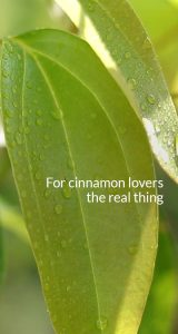 Buy cinnamon products - Cinnamon Hill